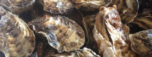 伊勢から取り寄せた岩牡蠣90個